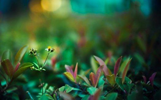 background-nature-wallpapers-reptiles-wallpaper-backgrounds-green-life-desktop